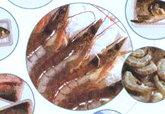 鲜冻水产品冷冻南美白对虾