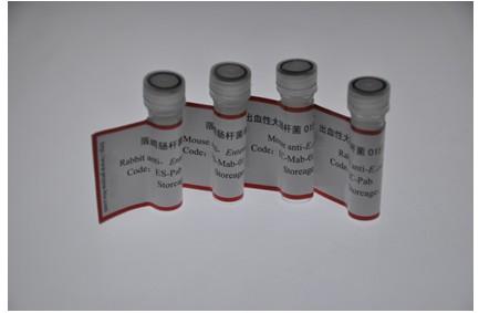 出血性大腸桿菌O157:H7 (E.coli O157:H7)多克隆抗體