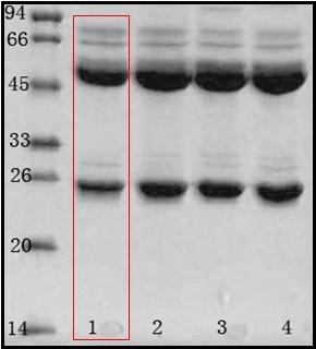 阪崎腸桿菌(Enterobacter sakazakii)單克隆抗體