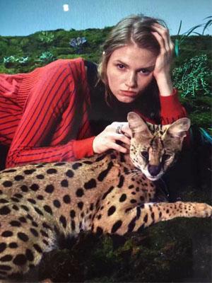 菲乐王牌Gana 与豹猫的合作拍摄