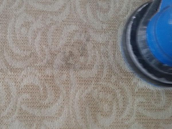 地毯顽垢处理前