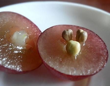 研究显示:葡萄籽让你补过的牙齿更坚固