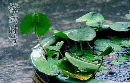 【顾大咖食话实说】黄梅天预防食物霉变:储存时控温控湿是关键