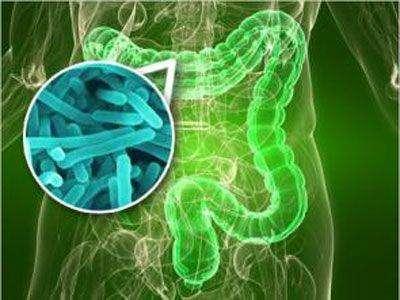 膳食结构对肠道菌群有显著影响