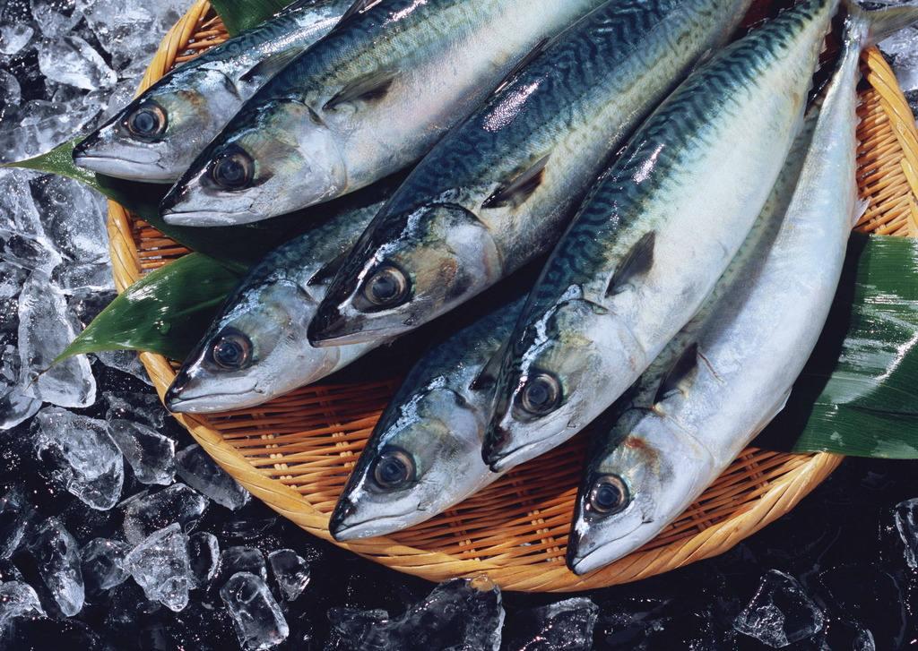 日本国立癌症研究中心:海鱼能缓解不安情绪