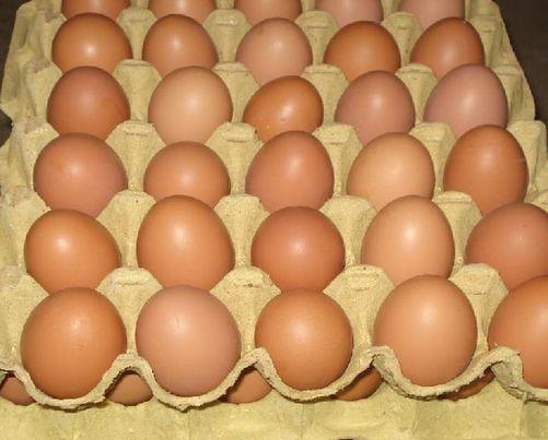 德科学家取得新突破 可检测出鸡蛋性别