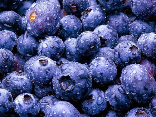 澳研究:蓝莓可抑制口腔细菌 降低蛀牙风险