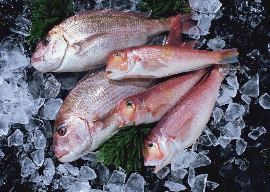 儿童每周吃二三次海鱼 可降低乳腺癌慢病风险