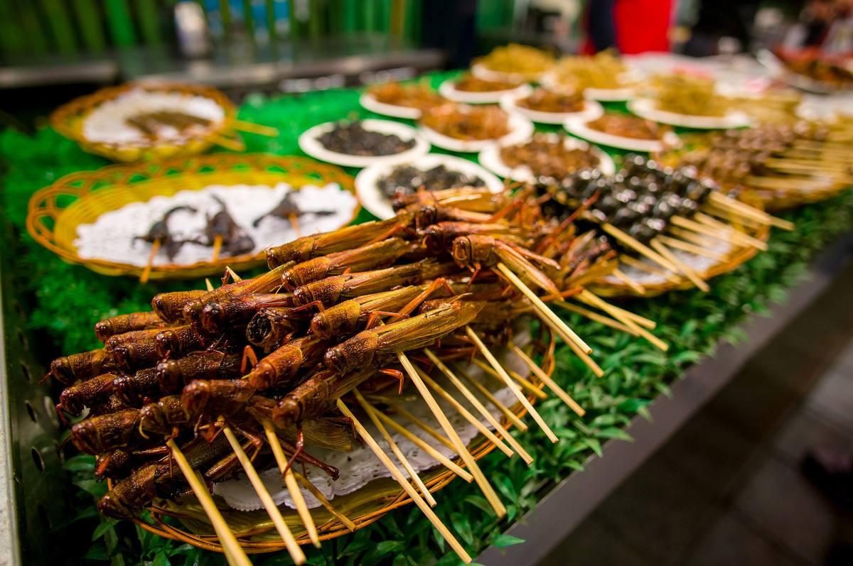 吃昆虫有什么好处? 联合国专家:不仅营养还生态环保