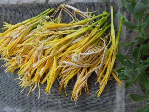 吃黄花菜也要讲科学