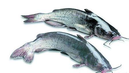 英媒:每周吃三次鱼可降低患肠癌风险