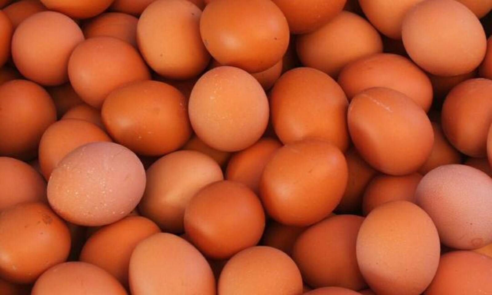 """""""红皮鸡蛋""""更有营养?"""