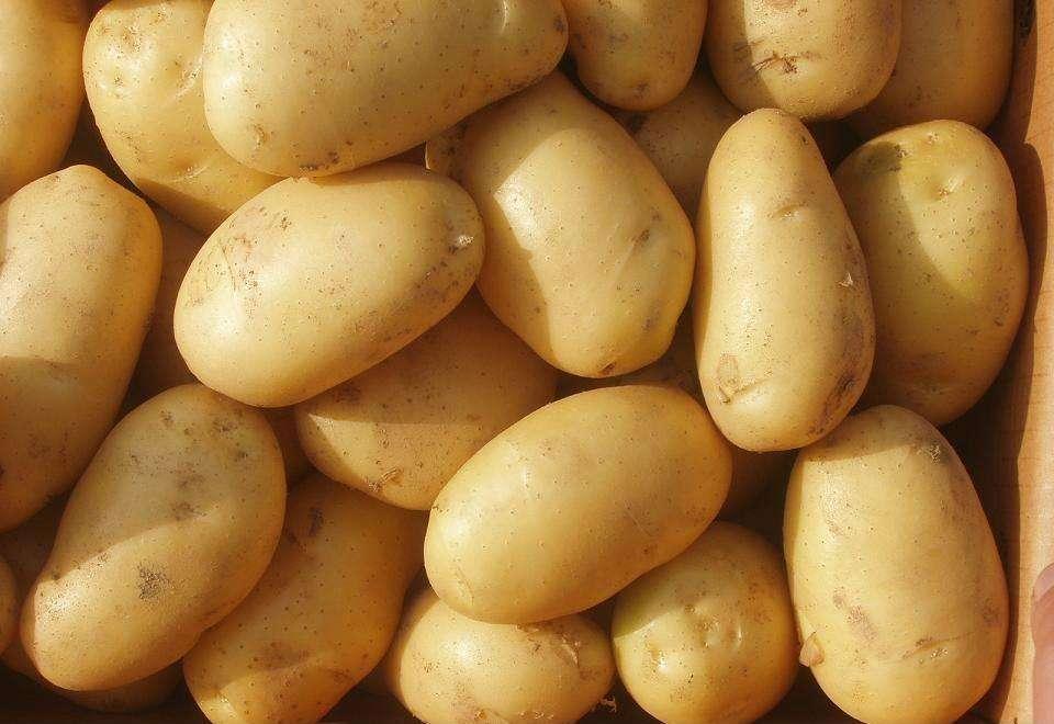 科学家发现土豆有益健康